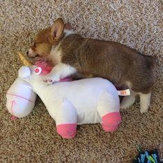 "A pet unicorn and a toy corgi... ""It's so fluffy!"""