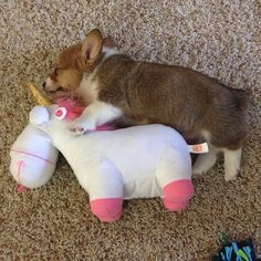 A pet unicorn and a toy corgi
