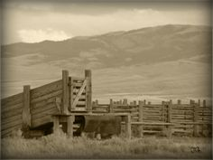 Minimal Monday - Go West Young (or old) Man Cattle Corrals, Ranch Farm, Cattle Drive, Go West, Old Men, More Pictures, Old Photos, Westerns, Minimalism