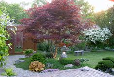 5 Best-Behaved Trees to Grace a Patio ~ What makes an ideal tree for a patio or other moderate-size outdoor living area? Generally you'll want a plant that's on the small side, good looking when you're sitting near or under it, and well groomed without the need for frequent pruning or cleanup....