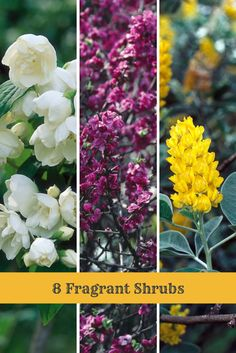 Add Aromas To Your Garden With These Shrub Types --> http://www.hgtvgardens.com/photos/shrubs-photos/shrubs-for-fragrance?soc=pinterest