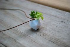Miniature Icosahedron: A Wearable Planter
