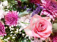Close up bouquet of fresh pink, white, purple flowers with rose, chrysanthemums, statice,  gypsophila. Floral background. Chrysanthemums, Gypsophila, Purple Flowers, Pink White, Bouquet, Victoria, Fresh, Floral, Plants
