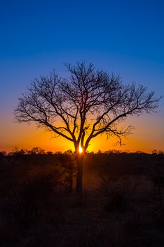 African Sunset - Leadwood Private Game Lodge - Sabi Sand (Next to Kruger Game Reserve)