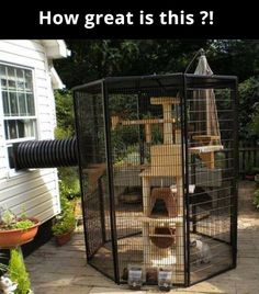 Catrageous Ways Your Cat Can Enjoy The Outdoors Safely Freedom for indoor cats or protection / safe house for outdoor cats.Freedom for indoor cats or protection / safe house for outdoor cats. Diy Jouet Pour Chat, Cat Ideas, Catio Ideas For Cats, Outdoor Cat Enclosure, Diy Cat Enclosure, Pet Enclosures, Diy Cat Toys, Cat Playground, Outdoor Playground
