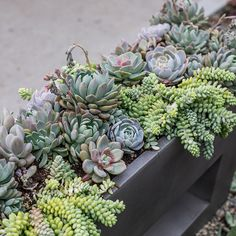 Organic Gardening Store Near Me Info: 7952757956 Rogers Gardens, Minimalist Garden, Asian Design, Planting Succulents, Succulent Plants, Cacti, Colorful Garden, Sophisticated Style, Organic Gardening