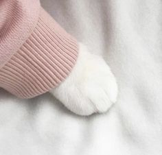 ☆*~ KAWAII ~*☆ cat paw in a sweater - pink - pastel - soft - girly - animal - pet - kitten - cute - aesthetic - kawaii I Love Cats, Cute Cats, Funny Cats, Adorable Kittens, Crazy Cat Lady, Crazy Cats, Animals And Pets, Cute Animals, Cat Aesthetic