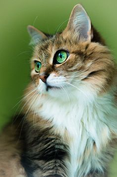 Gorgeous green eyes