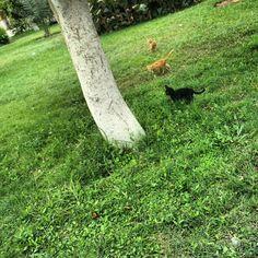 #kitten at my  #college ..  #ksu #cat #grass #palm #green #kitten at my  #college ..  #ksu #cat #grass #palm #green