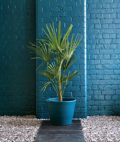 Ronseal Garden Paint in Midnight Blue - Don't be afraid to use bold colours in large areas.
