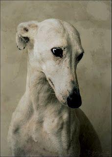Obsesión.  Petra Postma photography  Cara, galgo español, spanish greyhound. Lovely