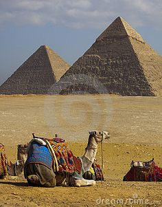 Egypt. Pyramids  with camels