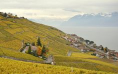 Lavaux Most Beautiful, Beautiful Places, Country Of Origin, Switzerland, Vineyard, World, Outdoor, Travel, Outdoors