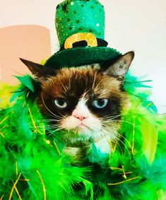 Image of: Grumpiest Cat The Official Grumpy Cats Tumblr Grumpy Cat Humor Grumpy Cat Quotes Kattenmemes Chagrijnige Merkenbureau Abcor 2756 Beste Afbeeldingen Van Grumpy Cat The Grumpy Group In 2019