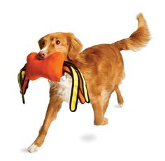 404 - Page not found - Active Dog Toys Dog Fetch Toy, Healthy Exercise, Dog Activities, Have Some Fun, Dog Toys, Scooby Doo, Your Dog, Product Launch, Happy