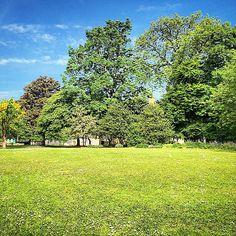 #beautiful #day #sun #warm #summer Vineyard, Golf Courses, Sun, Warm, Photo And Video, Summer, Photography, Outdoor, Beautiful