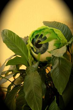 Scary plant eyeball-diy - We have some new crawling vines in our flower bed that need some dressing up. :)