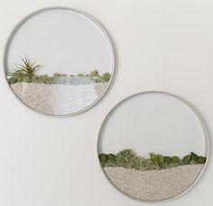 Exquisite round glass terrariums hang on the wall : TreeHugger