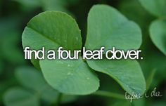 bucket list: find a four leaf clover