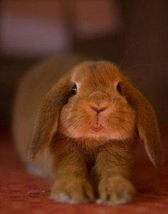 A Páscoa tá chegando e eu já to pensando em Chocolate...