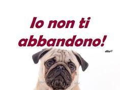 canzoni estate 2015 - contro l'abbandono dei cani - La storia di Orfeo, ...