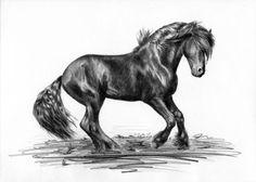 Rysunek oółówkiem, koń fryzyjski w galopie.