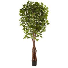 When it comes to an eye-catching piece of décor, this awesome huge and full 7.5' artificial Ficus tree leaves nothing to chance. With more than 1300 leaves, it has a full canopy of green, and looks great in an entryway, corner, or anywhere else that needs a splash of the woods. Whether it's for the home or the office, it's a piece that will look great for years, and makes a great gift as well.