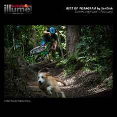Red Bull Illume is the world's greatest adventure and action sports imagery contest. February Images, Greatest Adventure, The World's Greatest, Red Bull, Wood, Animals, Instagram, Animales, Woodwind Instrument