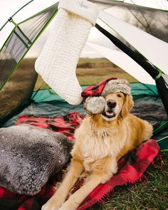 Just a chic golden retriever living it's best life.   www.bullymake.com via: @samanthabrookephoto