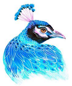 Peacock - by Ola Liola Peacock Bird, Peacock Feathers, Colorful Animals, Watercolor And Ink, Bird Art, Beautiful Birds, Beautiful Creatures, Phoenix, Illustration