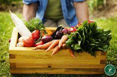 Mosaico Natural Alimento Orgânico