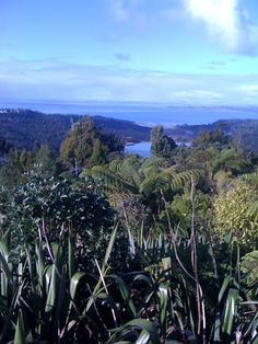 The Waitakere Ranges Long White Cloud, Westies, How To Raise Money, Ranges, New Zealand, Charity, Places, Photography, Travel