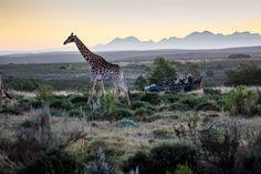 Gondwana Game Reserve launches mountain bike trails | Travel Opulent Box @travelopulent