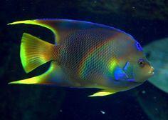#Angelfish  #Georgia #Aquarium @georgia lin. lin. Aquarium