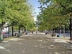Berlin Walking Tour: See the Best Berlin Landmarks: Central Walking Path Unter den Linden Walking Paths, Walking Tour, Budget Travel, Us Travel, Street Trees, World Cities, Tour Guide, Night Life, Street View