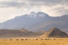 VOYAGE PÉROU - CULTURES ET DÉCOUVERTES - Du désert à la jungle