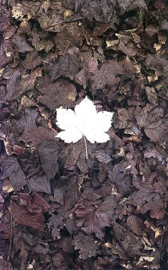 Andy Goldsworthy--another work so wonderful in its simplicity.