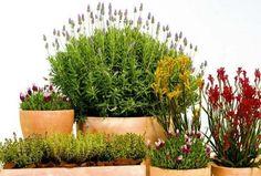 Plantas aromaticas una farmacia en casa Yard, Natural, Google, Ideas, Plant, Growing Plants, Vegetable Garden, Growing Up, Vegetable Gardening