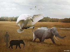 Julio Lacerda The pocket-sized pachyderms of Sicily An angry Sicilian giant swan chases an adult Palaeoloxodon bull away from its territory.