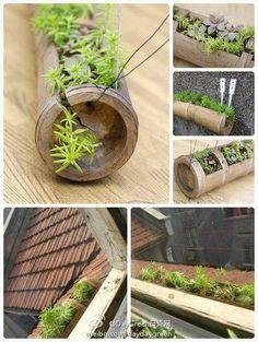 Consigue unos tallos de bambú y conviértelos en macetas, llena tu casa de plantas