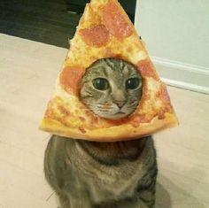 I see your Cinnabon cinnamon roll casserole and Roasted Chicken cat so I raise you a pizza cat.