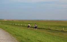 Die Ponte Rosa ist ein Reiterhof auf Baltrum. Von hier aus kann man tolle Ausritte an den Strand oder Kutschfahrten unternehmen.