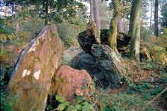 Ille-et-Villaine : forêt de Brocéliande, forêt légendaire du roi Arthur et de l'enchanteur Merlin.