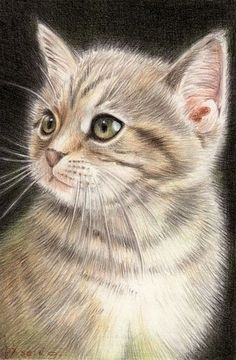 Adorable Kitten Art