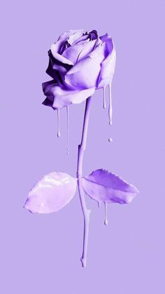 Purple Wallpaper Iphone, Iphone Wallpaper Tumblr Aesthetic, Flower Wallpaper, Aesthetic Wallpapers, Lavender Aesthetic, Purple Aesthetic, Cute Wallpaper Backgrounds, Pretty Wallpapers, Photo Wall Collage