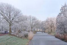 Omdat #ondernemen ook vrijheid en #genieten is. Een wandelingetje tussendoor met het fijne winterweer... (foto van gisteren)  #winter #Lelystad #xperiaz5 #nofilter #wandelen