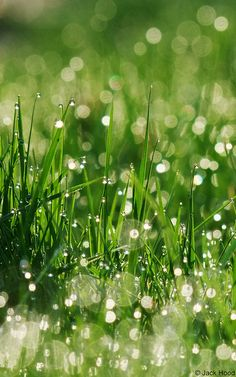 """Morning Dew Bokeh"" The way the light reflects the water is amazing.  The dots of light every where give a very calming feel.  The background is very soft while the foreground is in extreme focus."