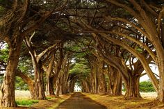 Cypress Tree Tunnel - Check me out on Instagram: https://www.instagram.com/jayhagani_photography/