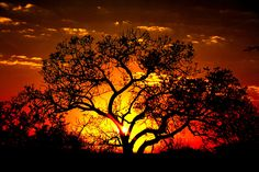 Kruger National Park, South Africa - Beautiful Image - Sunset Fire I LOVE Africa sunsets and sunrises ~ ! Best Sunset, Beautiful Sunset, Beautiful World, Beautiful Places, African Sunset, Africa Destinations, Out Of Africa, Am Meer, Sunset Photos