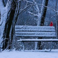 A #quiet snowy night with a cardinal sitting on bench.. :)